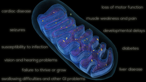 Alternative Treatment for Mitochondrial Diseases